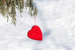 Red Valentines Day Heart Hanging In Pine Tree Royalty Free Stock Image