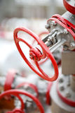 Red valves at the plant Royalty Free Stock Photo