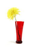 Red vase with autumnal yellow aster flower Stock Photos