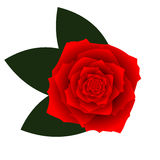 Red vector rose on white background Stock Photo