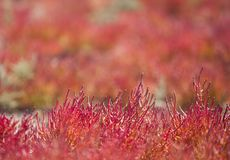 Red vegetation Stock Photo