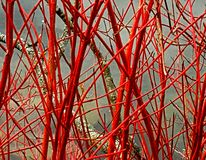 Red branches in fall, autumn ambiance.
