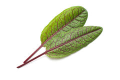 Red Vein Sorrel Stock Photos