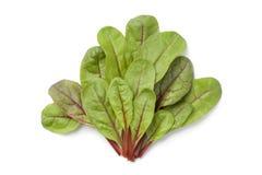 Red veined sorel leaves. Red veined sorrel leaves on white background Stock Image