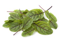Red veined sorrel leaves. On white background Stock Photos