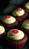 Red Velvet Cupcakes. Sweet Red Velvet Cupcakes with floral design on top of cream. on a black background stock photo