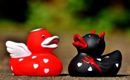 Red, Vertebrate, Water Bird, Ducks Geese And Swans Stock Photo