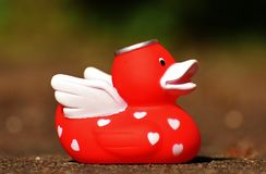 Red, Vertebrate, Water Bird, Ducks Geese And Swans Stock Photography