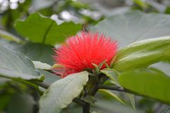 Red vibrant flower in a forest Royalty Free Stock Images