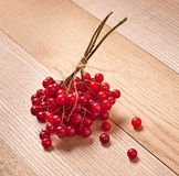 Red viburnum berries Stock Photography