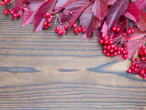 Red viburnum berries and fall leaves Royalty Free Stock Photo