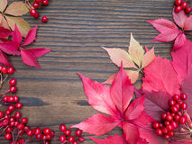 Red viburnum berries and fall leaves frame Stock Image