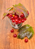Red viburnum berries in the glass Royalty Free Stock Photo