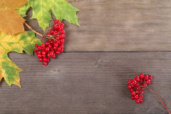 Red viburnum berries Royalty Free Stock Image