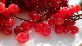 Red Viburnum Berries photo Stock Photos