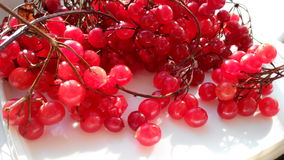 Red Viburnum Berries photo Royalty Free Stock Photo