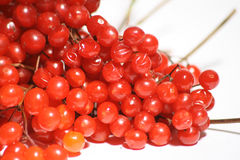 Red viburnum Berries photo Royalty Free Stock Photography