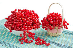Red viburnum berries in plate and basket on blue underlay. Red guelder rose berries in white plate and wicker basket and dropped-out cluster on blue underlay Stock Photo