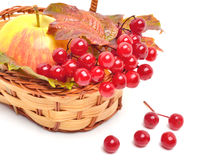 Red viburnum berries and ripe apple in the basket Royalty Free Stock Image