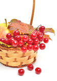 Red viburnum berries and ripe apple in the basket Royalty Free Stock Photography
