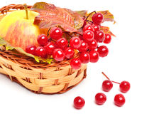 Red viburnum berries and ripe apple in the basket Royalty Free Stock Photo