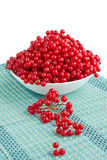Red viburnum berries in white plate with dropped-out cluster. Red berries of guelder rose isolated in white plate with dropped-out cluster on blue underlay Royalty Free Stock Image