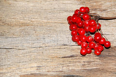 Red viburnum berries on wooden background Stock Images