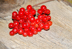 Red viburnum berries on wooden background Stock Photography