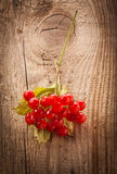 Red viburnum berries on wooden table Stock Image