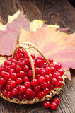 Red viburnum berry and autumn leaves Stock Photography