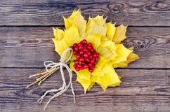 red viburnum Stock Photo
