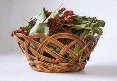 Red viburnum in wicker basket Stock Images