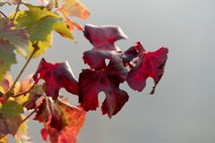Colored autumn leaves Stock Image