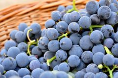 Red vine grapes in basket Stock Photos
