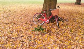 Red vintage bicycle against a tree trunk surrounded by autumn leaves Stock Photo