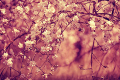 Red vintage blossoming orchard Stock Photo