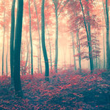 Red vintage forest Royalty Free Stock Photo