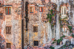 Red vintage old brick wall with windows and green ivy Stock Photography