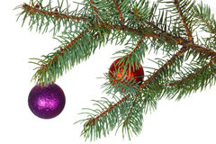 Red and violet balls on the branch of Christmas tree Stock Photos
