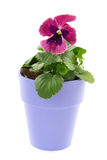 Red Violet flowers Stock Photo
