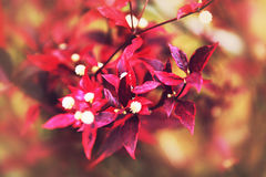 Red and violet flowers. On a nature background Stock Photos