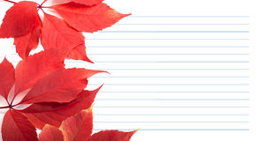Red virginia creeper leaves and notebook paper Stock Photo