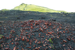 Red volcanic rocks, pumice stones on black sand and green hill near Laki craters, Iceland Stock Photos