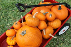 Red Wagon and Pumpkins. Little red wagon full of orange pumpkins of various types and sizes Stock Photos