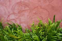 Red wall background with foliage Royalty Free Stock Photos