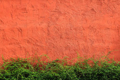 Red wall and green grass. Backgound stock photos