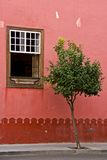 Red wall and tree Royalty Free Stock Photo