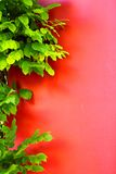 Red walls and green leaves royalty free stock images