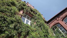 Red walls of the old castle in flowers. Beautiful, history, design, green, landscape, nature, vintage stock video footage