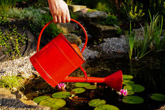 Red water can. Picture of a red water can with a garden pond in the background Royalty Free Stock Photos